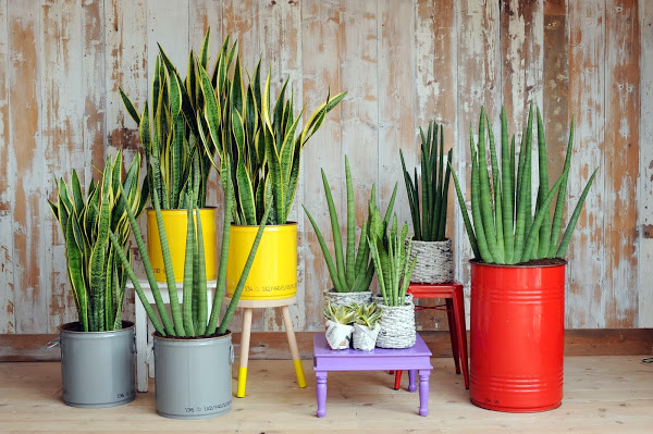 Plants in feng shui energy generators in your house for Como decorar un jardin con plantas
