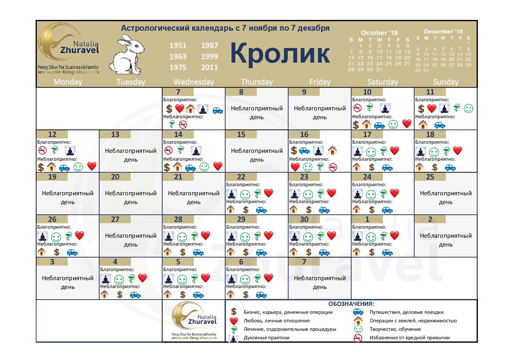 foto_4_krolik_november